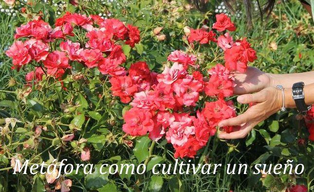 Como cultivar un sueño de la misma manera que se cultivan las plantas