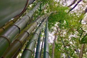 Metáforas de Coaching: El crecimiento del bambú chino (II)